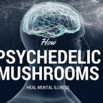 How Psychedelic Mushrooms Heal Mental Illness