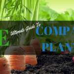 The Ultimate Guide to Companion Planting