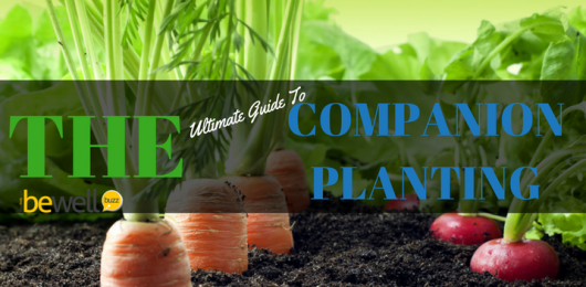 <thrive_headline click tho-post-43089 tho-test-153>The Ultimate Guide to Companion Planting</thrive_headline>