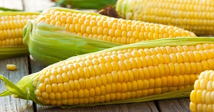Maltodextrin: US manufacturers primarily derive the starch from corn.