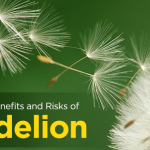 6 Surprising Benefits and Risks of Dandelion