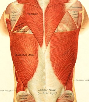 What is Fascia and How Can You Take Care of it | BeWellBuzz