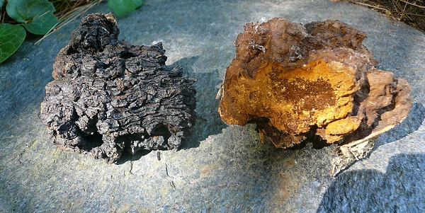 Best superfoods in 2018: Chaga mushrooms