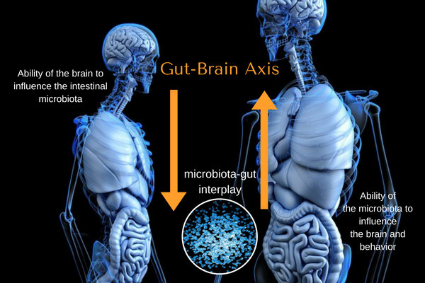 The Mind Gut Connection