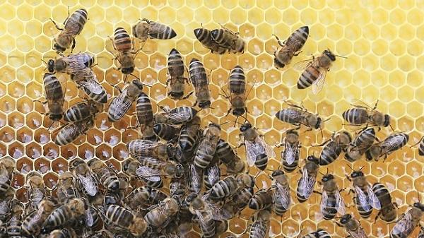 Replacing sugar with honey: sugar vs honey calories