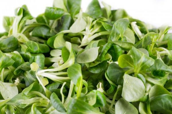 Spring Foods: Watercress