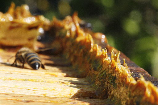 How does bee propolis benefit your health?