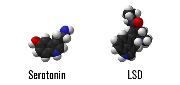 Serotonin and LSD molecules