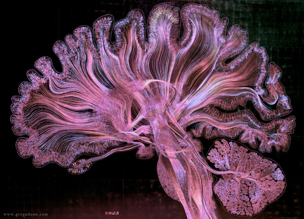 The unique ways that psychedelics interact with the brain.