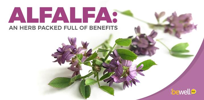 The Surprising Health Benefits of Alfalfa