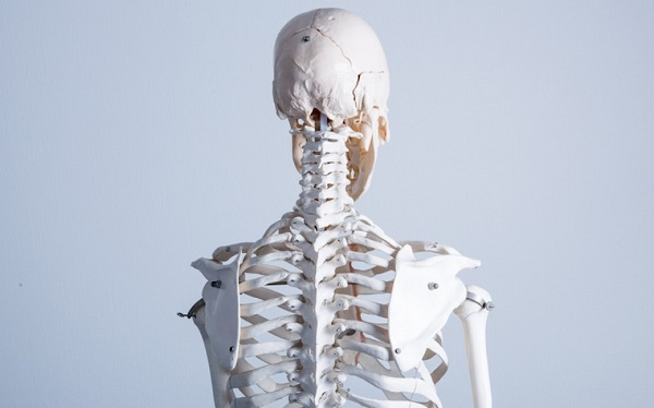 CBD can help strengthen bones as well as accelerate the healing of fractures.
