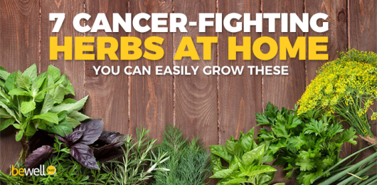 Why You Should Grow These Powerful Cancer-Healing Herbs