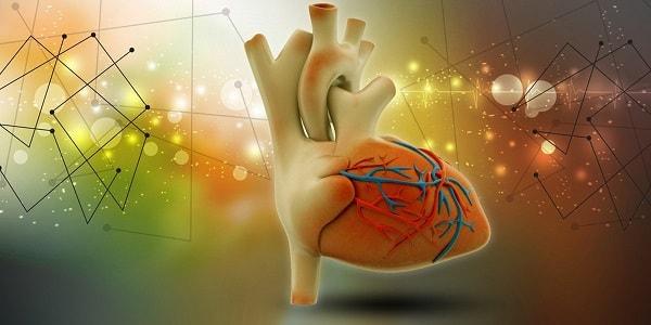 Le potassium, les antioxydants et la teneur élevée en fibres du fruit de baobab soutiennent la santé cardiaque. &quot;Width =&quot; 600 &quot;height =&quot; 300 &quot;/&gt; </p> <p> <span style=