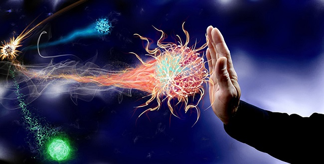 When you starve, the system recycles a lot of the immune cells that are not needed or damaged, in order to save energy.