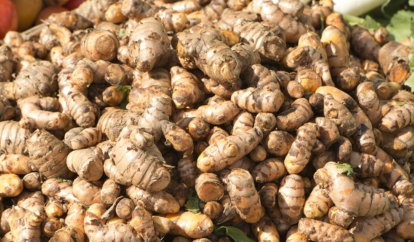 Like ginger root, turmeric root can easily be grown indoors in a pot with some organic soil.