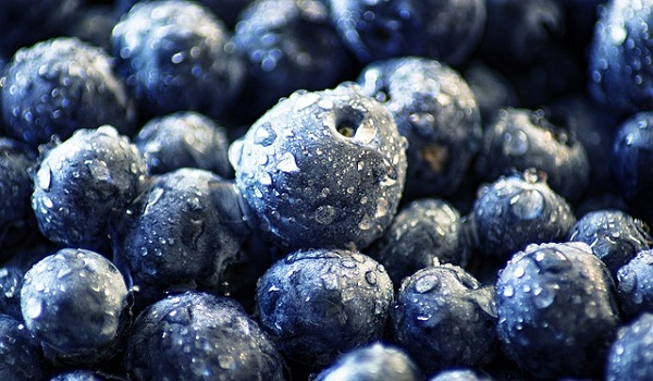Blueberries contain one of the highest concentrations of antioxidants of any food.