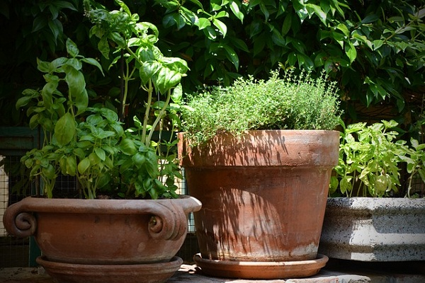 Have you ever considered growing your own healing herbs at home?
