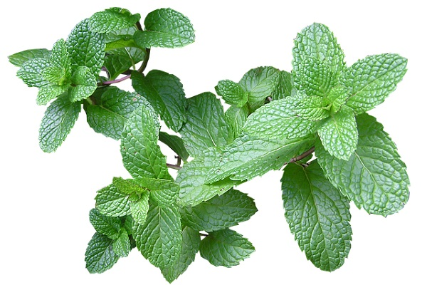 Refreshing, sweet, light, and aromatic, mint is one of the best healing herbs when it comes to oral health.