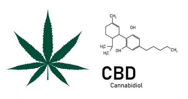 Unlike marijuana, CBD oil does not contain THC.