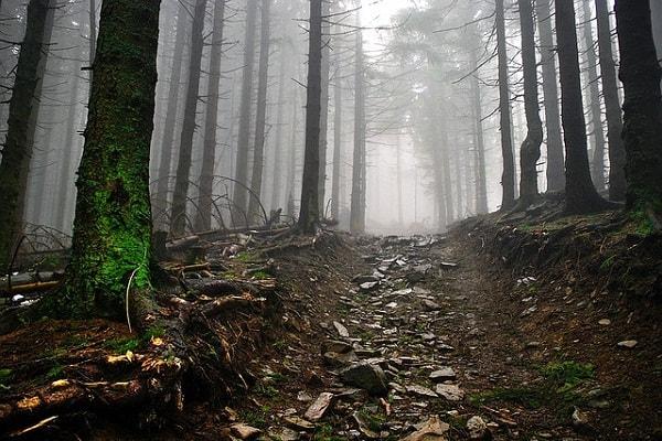 run green - rocky road