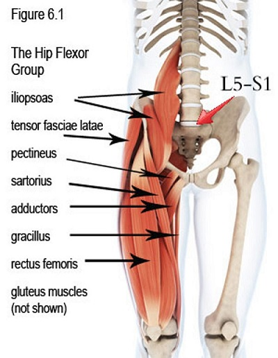 What are Hip Flexors?