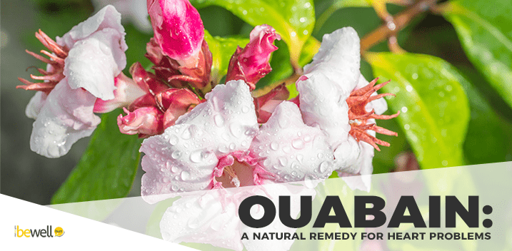 Ouabain: A Natural Remedy for Heart Disease