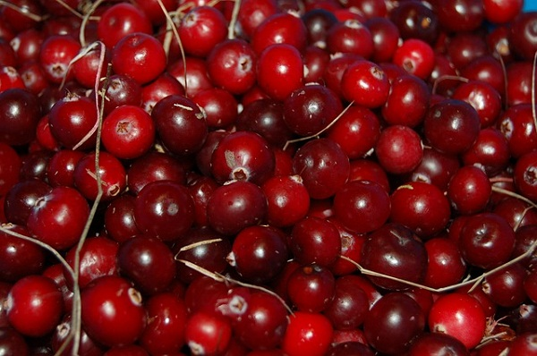 Cranberries are a superfood and make a superdrink.